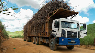 truck loaded with sugar cane, Brazil.