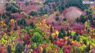 Incredibili colori d'autunno nello Utah