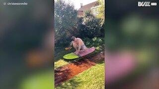 Cette famille australienne retrouve les joies du surf... sur l'herbe