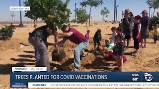 JNF plants trees for those who get COVID vaccine