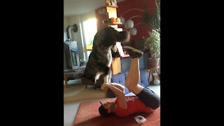 Australian Shepherd and owner doing some acroyoga together
