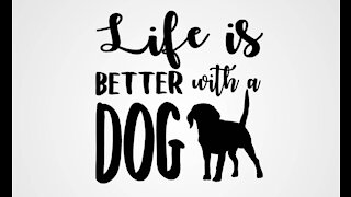 Life's Better With A Dog