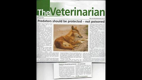 Dingoes Should be Protected – Not Poisoned