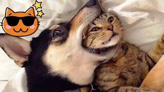 Funny Cat Compilation, Clean, No Swearing