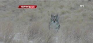 Clark County outlaws varmint hunts