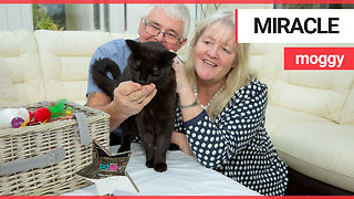 Miracle cat who stumbled home after being shot named as pet survivor of the year