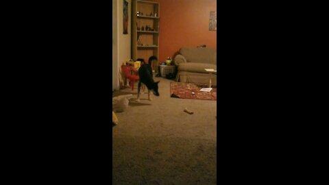 Watch the ginga ninja defend his room