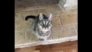 Cute cross eyed kitty cat