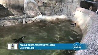Summer Fun! // Denver Zoo