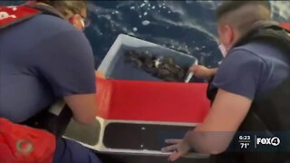 Coast Guard releases sea turtles