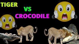 Tiger Crocodile Fight I Tiger crocodile