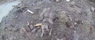 Dog rescued after massive landslide in Norway