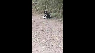 A cut feral kitten