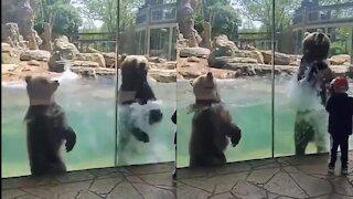 Bears making waves