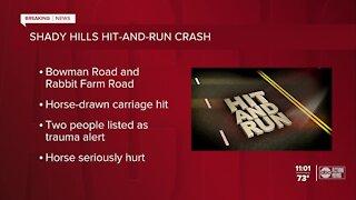 Shady Hills hit-and-run crash