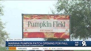 Marana pumpkin patch reopens