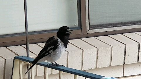 Birdsong Brightens Stormy Day