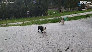 Hund sprænger sæbebobler i haglvejr