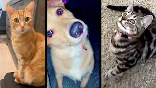 """Compilation of pets reacting to """"talking"""" cat sounds"""