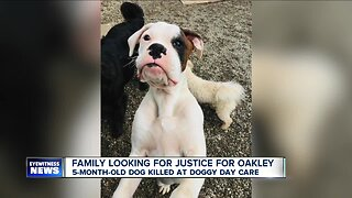 Family wants justice after dog was killed at a doggy daycare