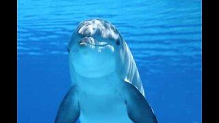 Den fantastiske delfinverdenen
