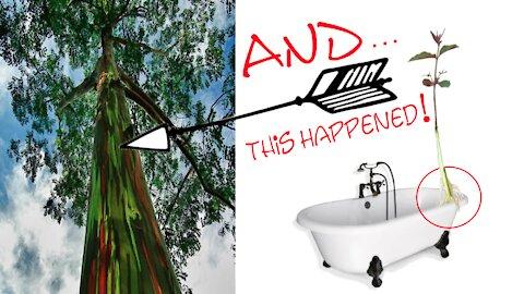 We Grew A Rainbow Tree In The Tub!