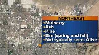 Las Vegas valley prepares for allergy season