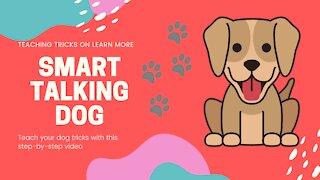 Cute Smart Talking Dog