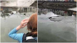Des enfants surprennent un requin pendant leurs cours de voile