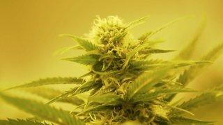 Utah Legalizes Medical Marijuana