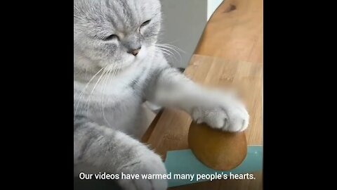 Cooking with cat gone viral