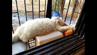 cat after a warm bath