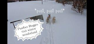 Pawfect doggos visit winter wonderland