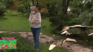 Tree falls on Broadview Heights home