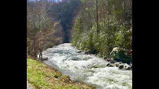 Nature Park Bridge and Flowing Stream