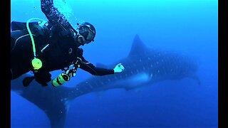 Scuba diver performs world's most perfect photo bomb