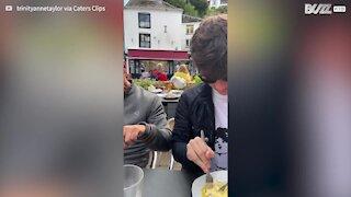 Greedy seagull gulps down sausage in amusing manner