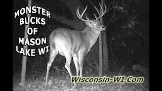 Monster Bucks of Mason Lake Wisconsin Trail Camera Video – Landman Realty LLC