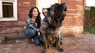 Ultimate Guard Dog Weighs 200lbs   TRULY
