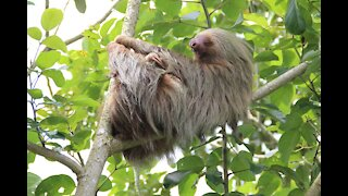 How to Survive a Sloth Attack