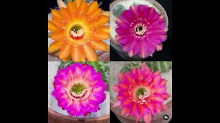 Four different flowers.Very different!