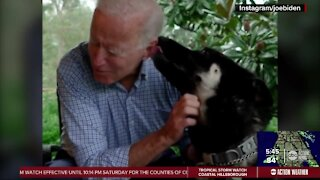 Local shelters hope First Shelter Dog in White House encourages adopting