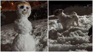 Hunden beskytter huset fra en skikkelig skummel fare, en snømann!