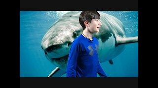 The shark attack