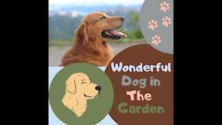 Wonderful dog in the garden