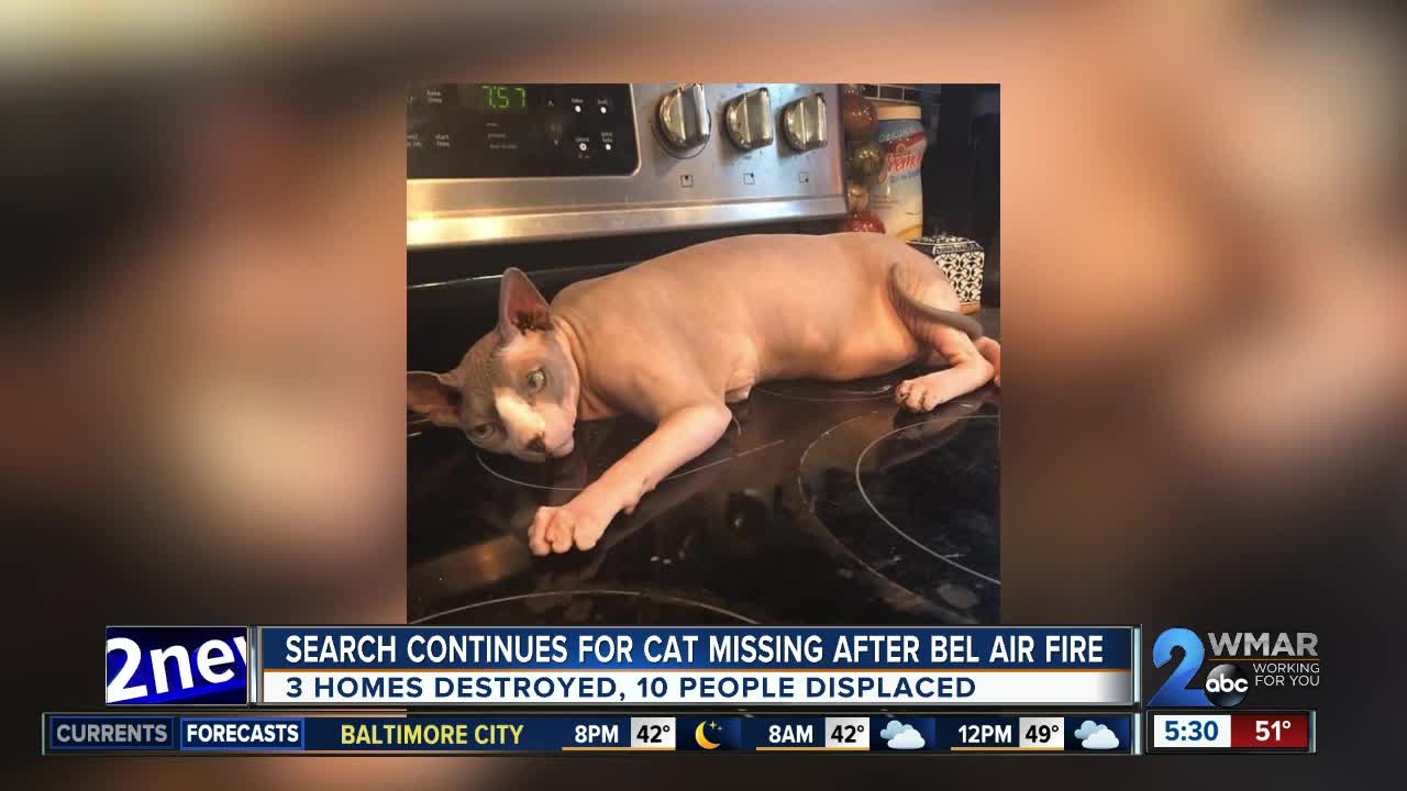Search continues for cat missing after Bel Air house fire
