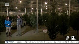 Mulhall's offers advice on picking & caring for live Christmas trees