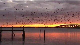 En fugleflokk gjør solnedgangen enda mer fantastisk