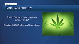 360: Different perspectives on marijuana potency