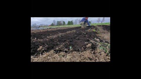 Spring 2020 garden planting